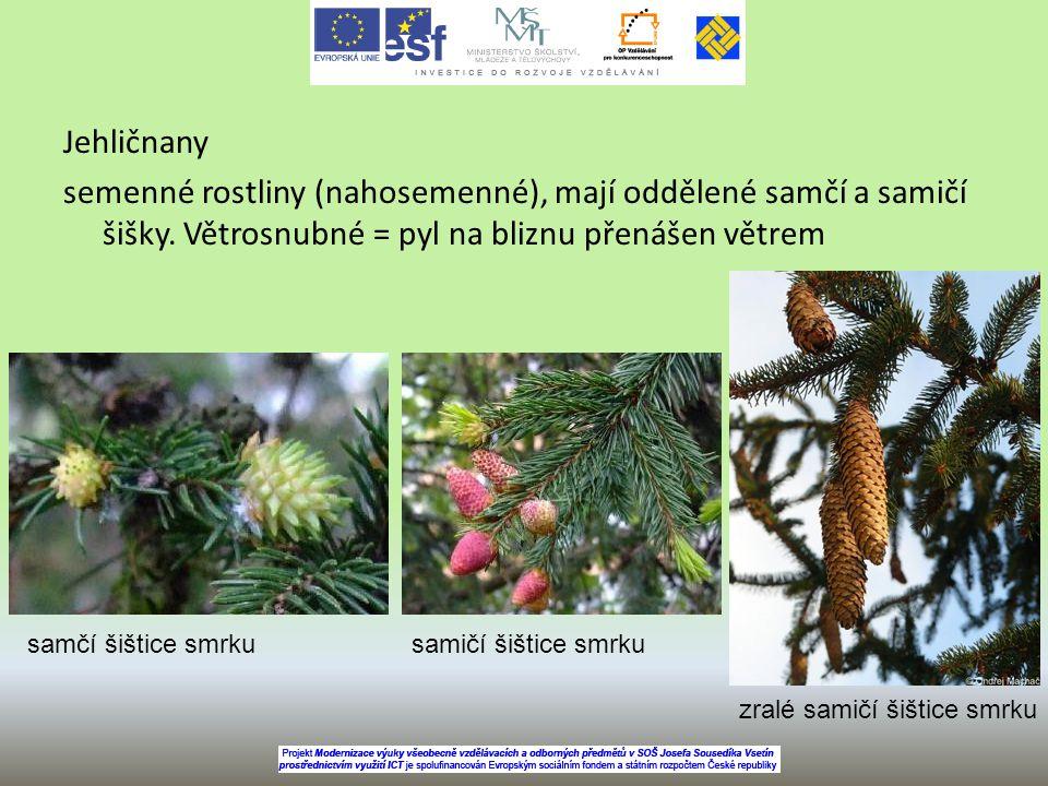 Jehličnany semenné rostliny (nahosemenné), mají oddělené samčí a samičí šišky. Větrosnubné = pyl na bliznu přenášen větrem