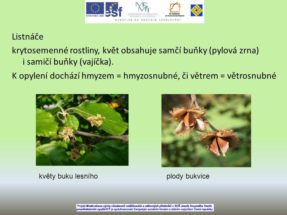 Listnáče krytosemenné rostliny, květ obsahuje samčí buňky (pylová zrna) i samičí buňky (vajíčka). K opylení dochází hmyzem = hmyzosnubné, či větrem = větrosnubné
