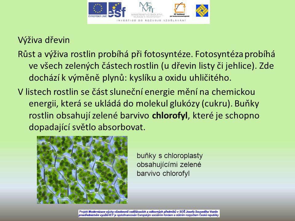 Výživa dřevin Růst a výživa rostlin probíhá při fotosyntéze