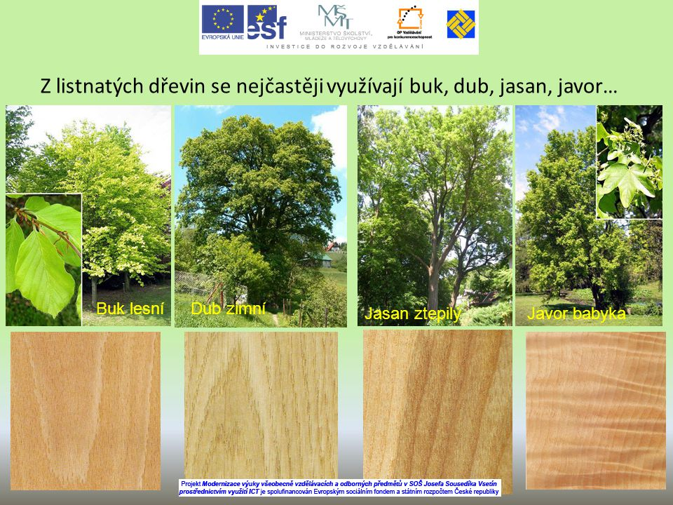 Z listnatých dřevin se nejčastěji využívají buk, dub, jasan, javor…