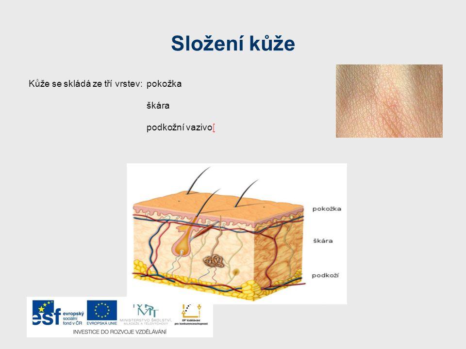 Složení kůže Kůže se skládá ze tří vrstev: pokožka škára