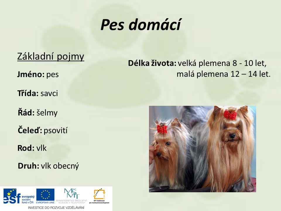 Pes domácí Základní pojmy