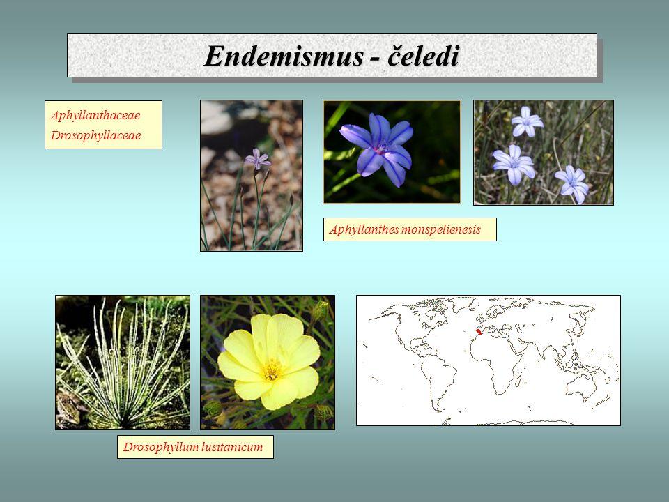 Endemismus - čeledi Aphyllanthaceae Drosophyllaceae