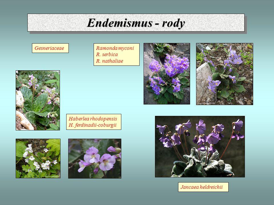 Endemismus - rody Gesneriaceae Ramonda myconi R. serbica R. nathaliae