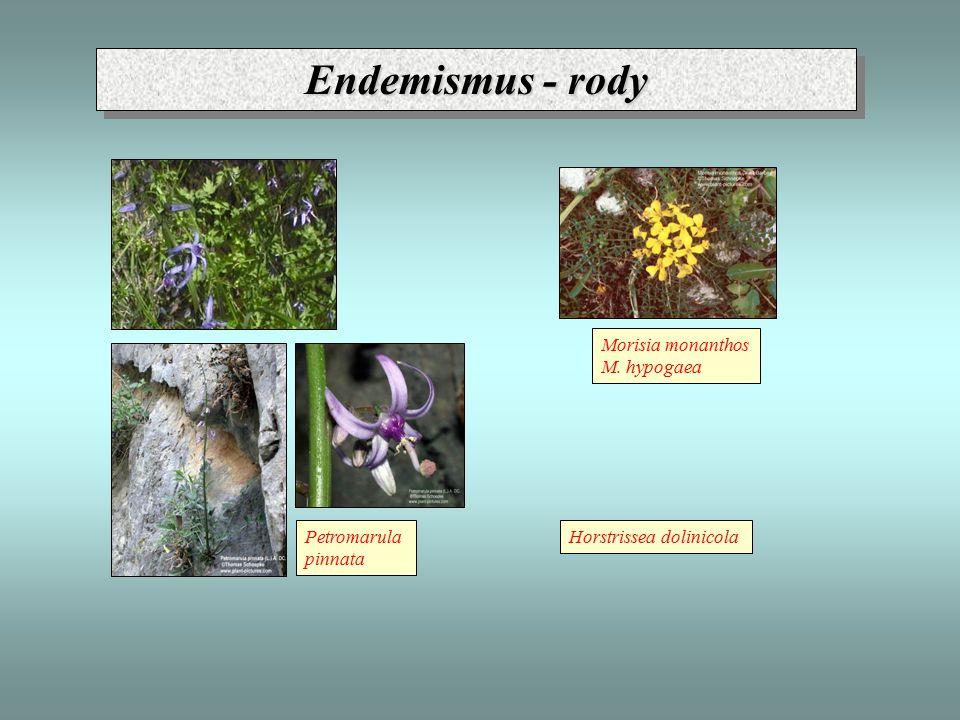 Endemismus - rody Morisia monanthos M. hypogaea Petromarula pinnata