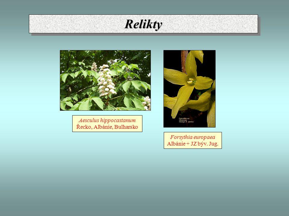 Relikty Aesculus hippocastanum Řecko, Albánie, Bulharsko