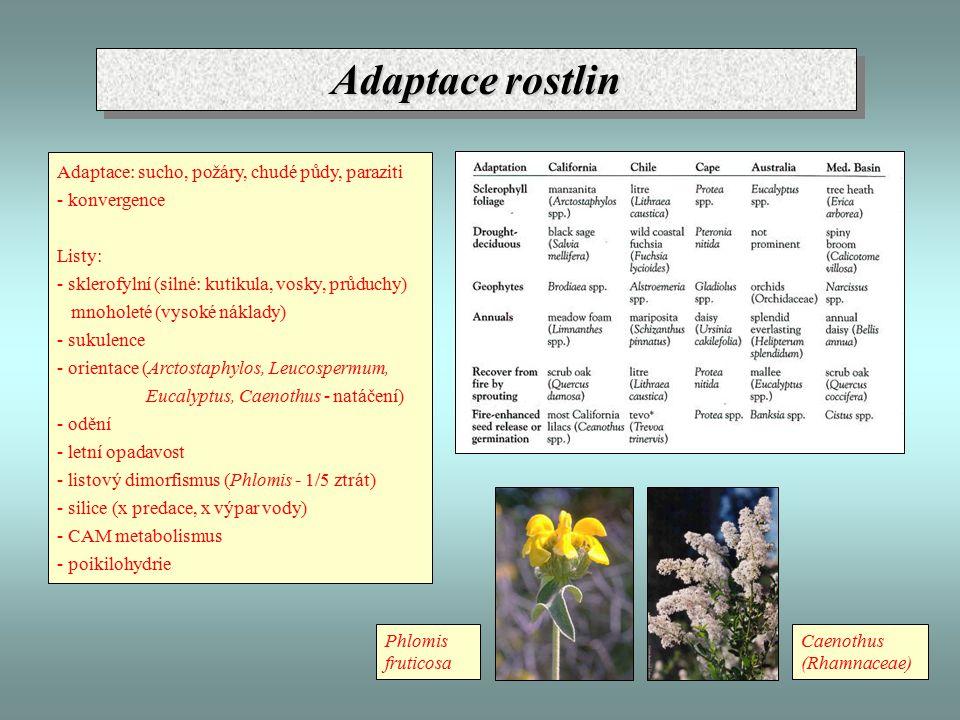 Adaptace rostlin Adaptace: sucho, požáry, chudé půdy, paraziti