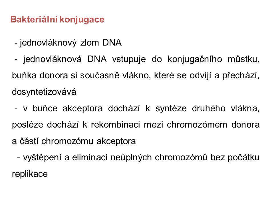 Bakteriální konjugace