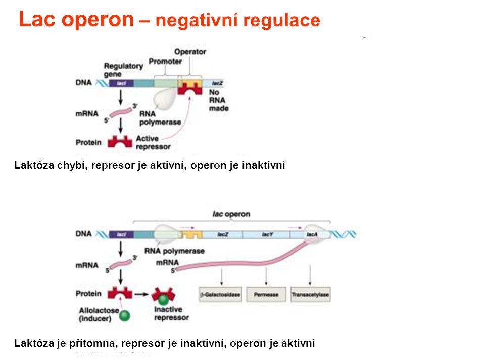 Lac operon – negativní regulace