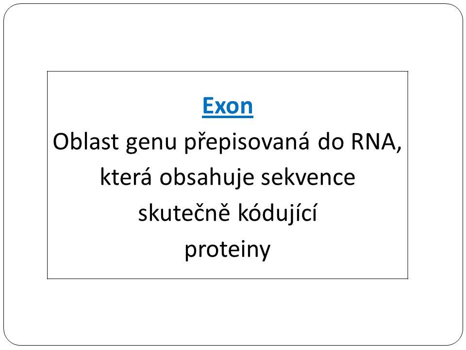 Exon Oblast genu přepisovaná do RNA, která obsahuje sekvence skutečně kódující proteiny