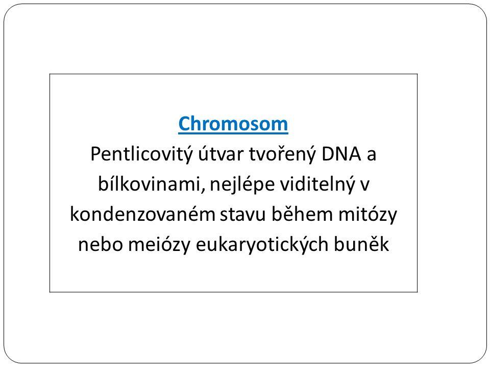 Pentlicovitý útvar tvořený DNA a bílkovinami, nejlépe viditelný v