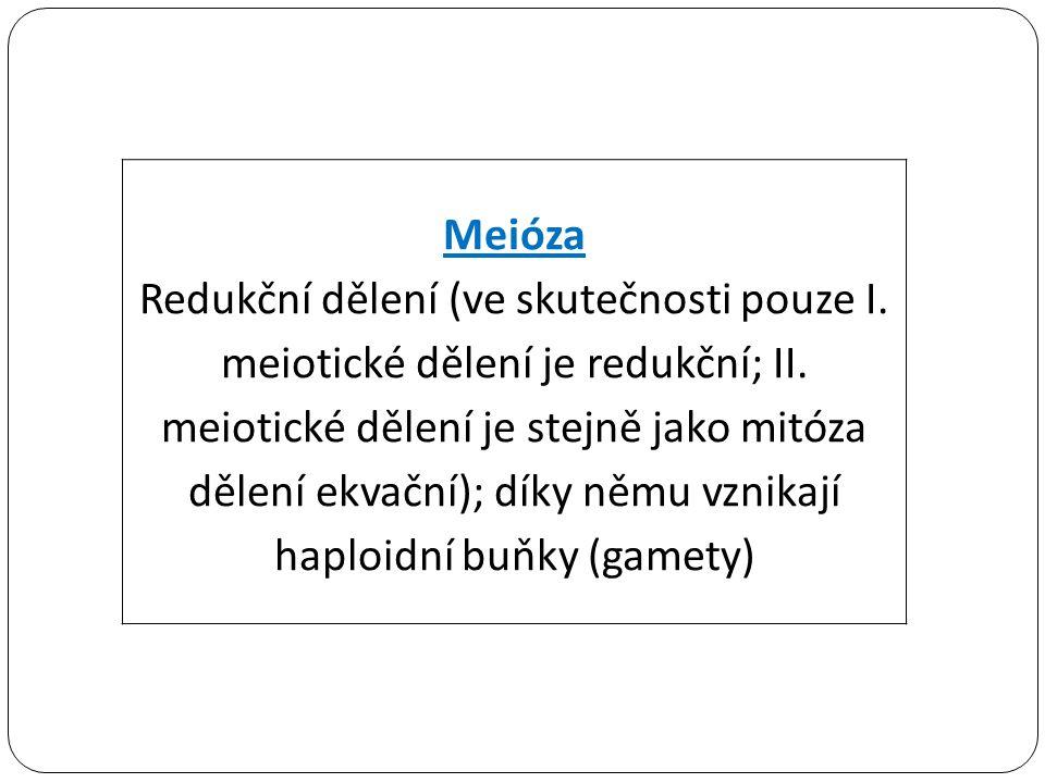 haploidní buňky (gamety)
