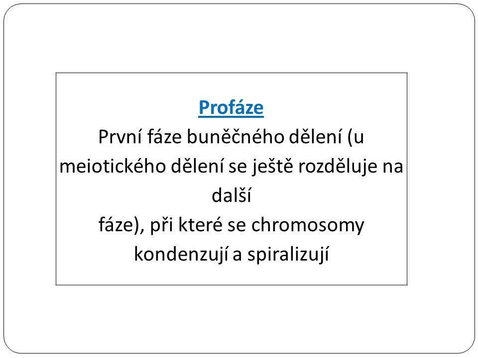 fáze), při které se chromosomy kondenzují a spiralizují