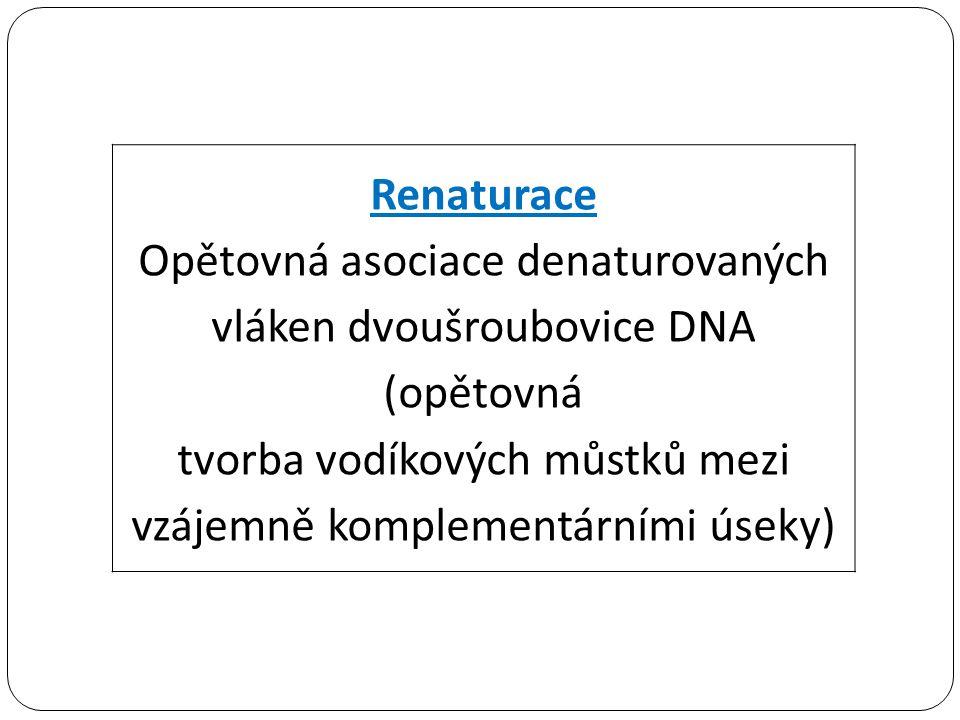 Opětovná asociace denaturovaných vláken dvoušroubovice DNA (opětovná