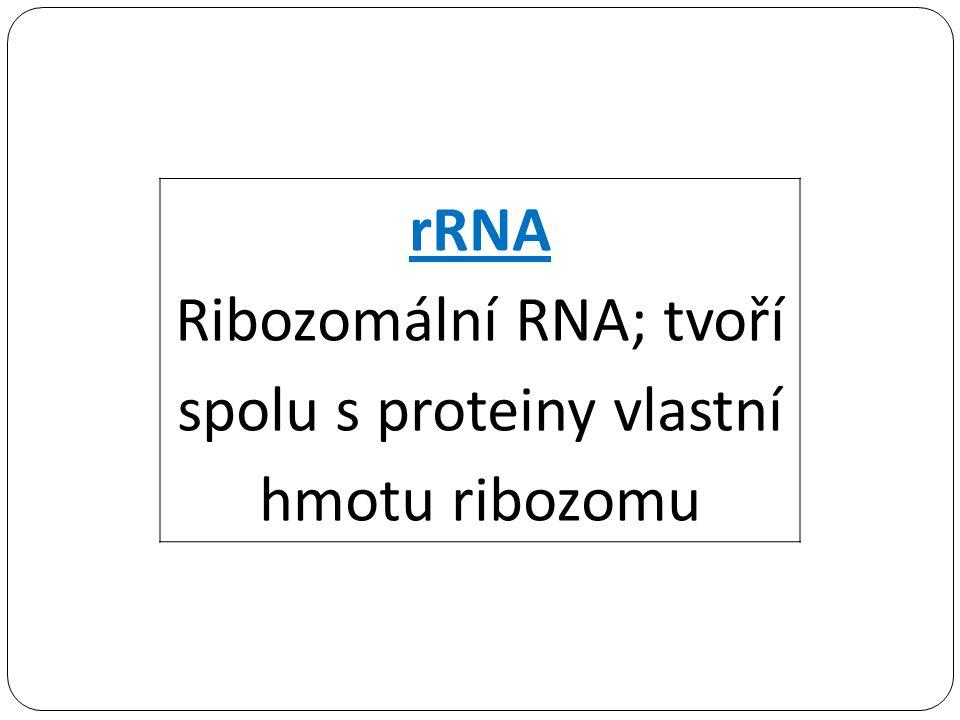 Ribozomální RNA; tvoří spolu s proteiny vlastní hmotu ribozomu