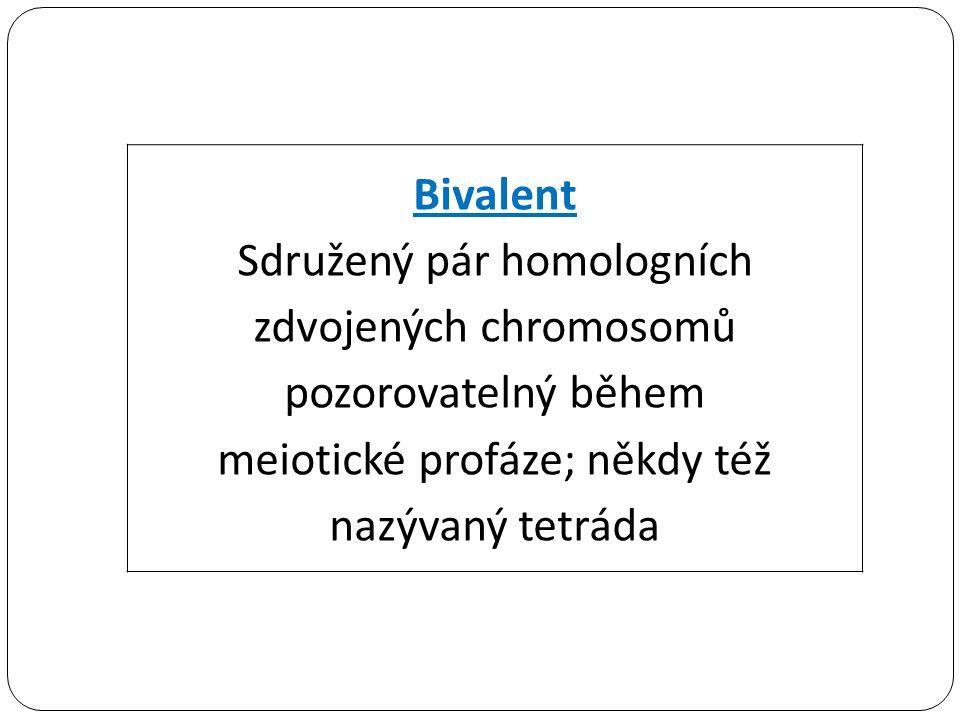 Sdružený pár homologních zdvojených chromosomů pozorovatelný během