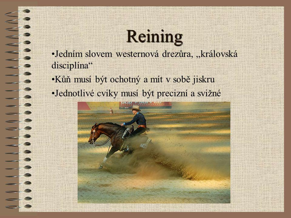 """Reining Jedním slovem westernová drezůra, """"královská disciplína"""