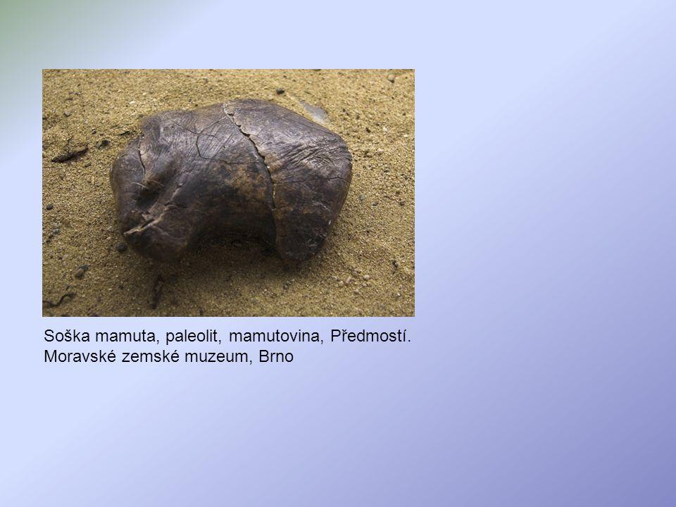 Soška mamuta, paleolit, mamutovina, Předmostí