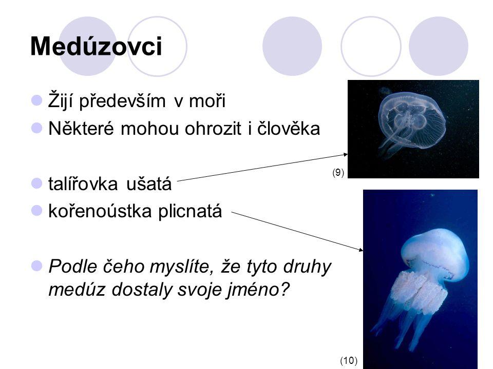 Medúzovci Žijí především v moři Některé mohou ohrozit i člověka