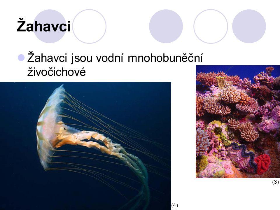 Žahavci Žahavci jsou vodní mnohobuněční živočichové (3) (4)