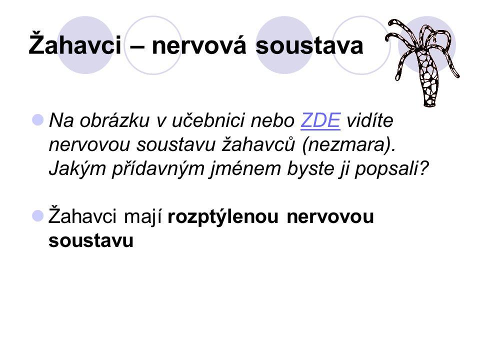 Žahavci – nervová soustava