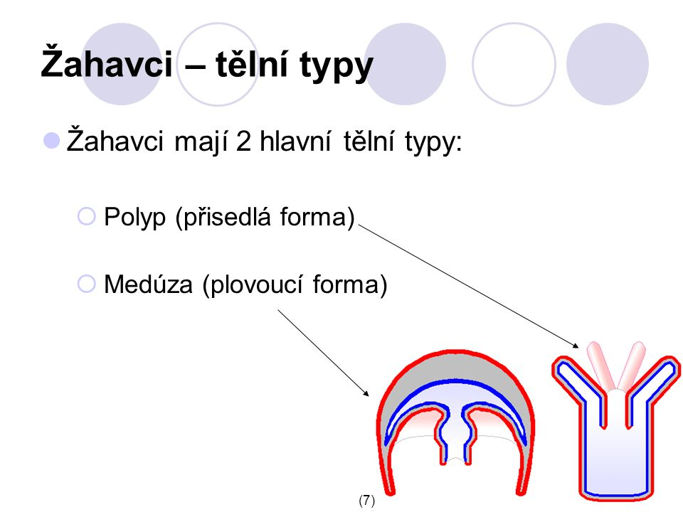 Žahavci – tělní typy Žahavci mají 2 hlavní tělní typy: