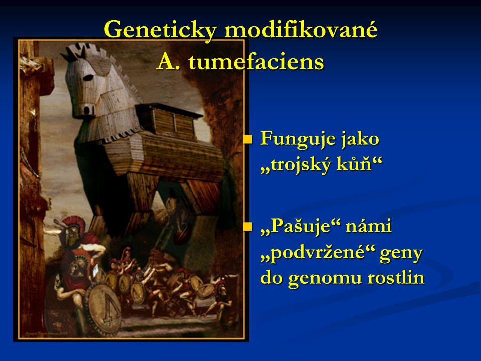 Geneticky modifikované A. tumefaciens