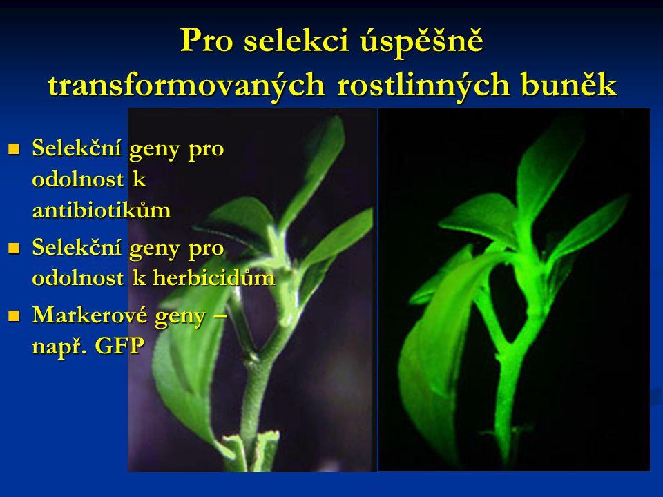 Pro selekci úspěšně transformovaných rostlinných buněk