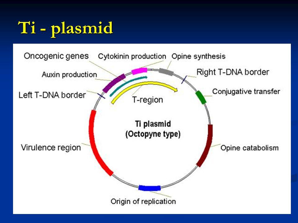 Ti - plasmid