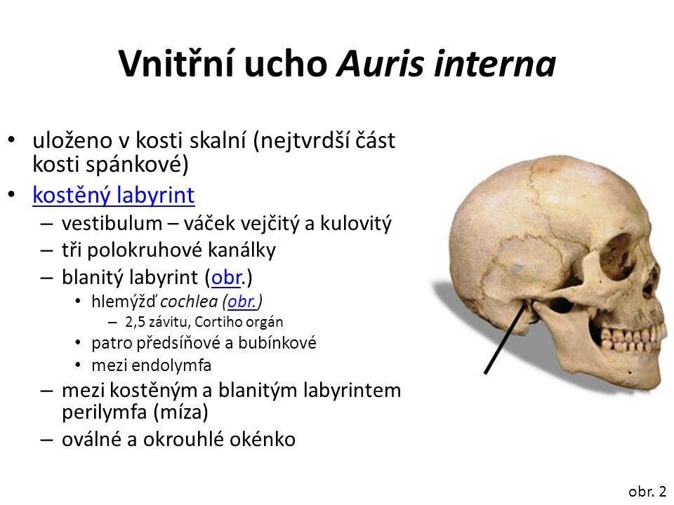 Vnitřní ucho Auris interna