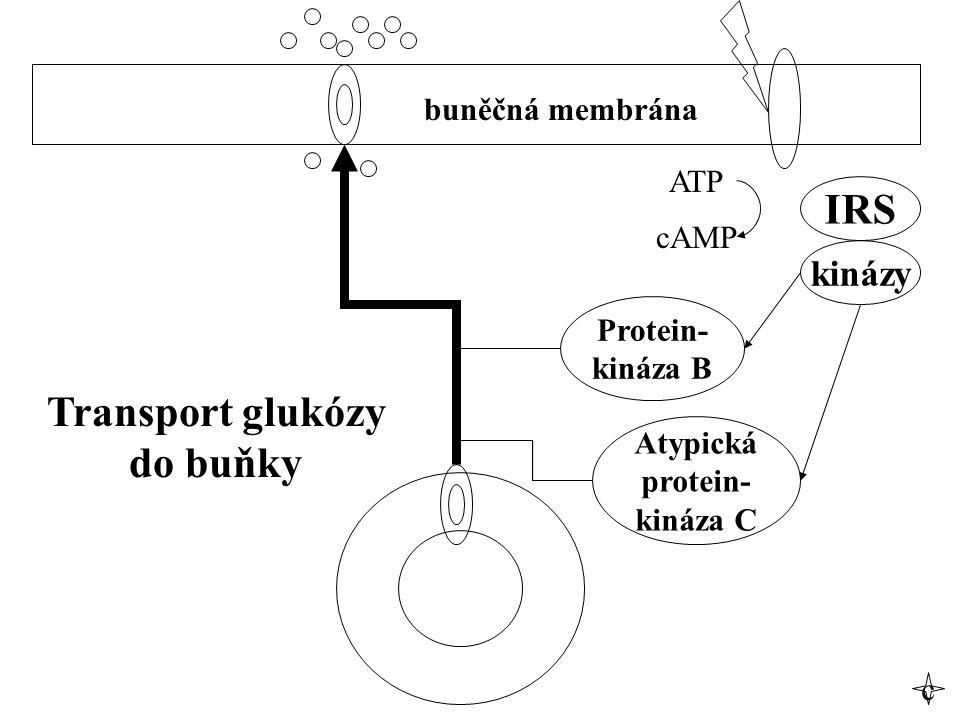 IRS Transport glukózy do buňky