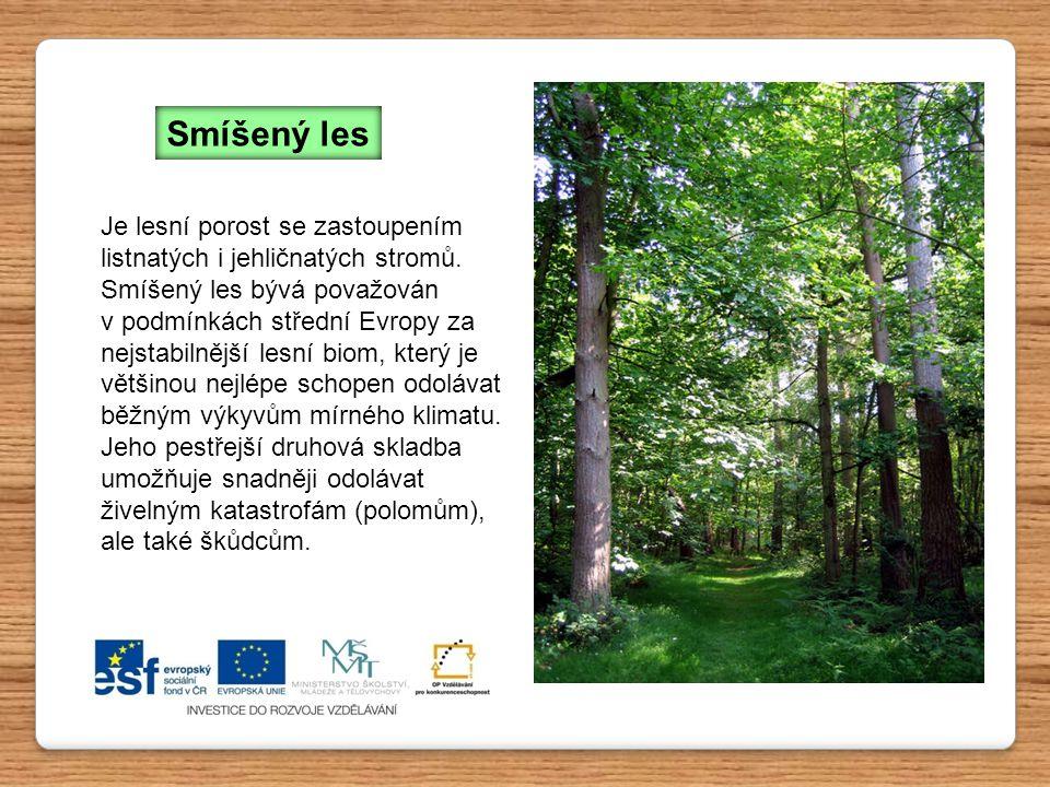 Smíšený les Je lesní porost se zastoupením listnatých i jehličnatých stromů. Smíšený les bývá považován.