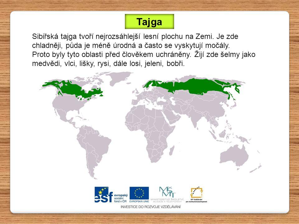 Tajga Sibiřská tajga tvoří nejrozsáhlejší lesní plochu na Zemi. Je zde chladněji, půda je méně úrodná a často se vyskytují močály.