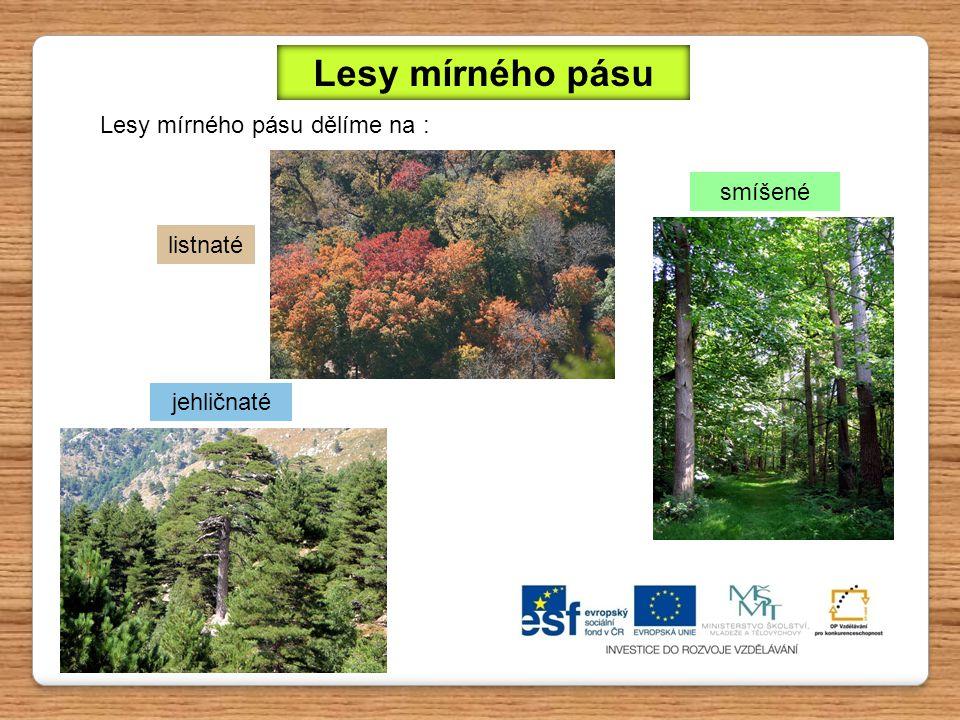 Lesy mírného pásu Lesy mírného pásu dělíme na : smíšené listnaté