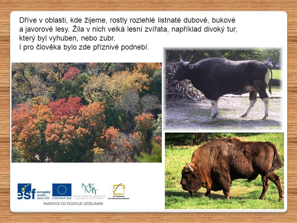 Dříve v oblasti, kde žijeme, rostly rozlehlé listnaté dubové, bukové a javorové lesy. Žila v nich velká lesní zvířata, například divoký tur, který byl vyhuben, nebo zubr.