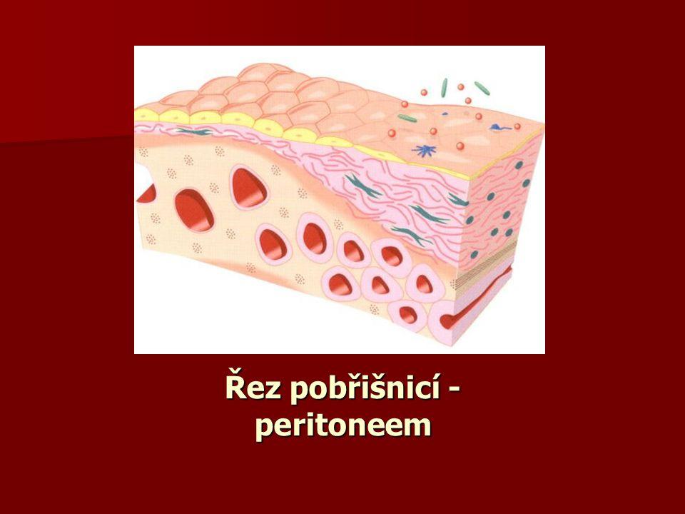 Řez pobřišnicí - peritoneem