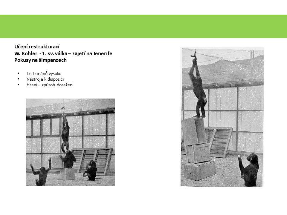 W. Kohler - 1. sv. válka – zajetí na Tenerife Pokusy na šimpanzech