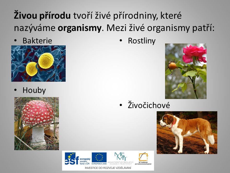 Živou přírodu tvoří živé přírodniny, které nazýváme organismy