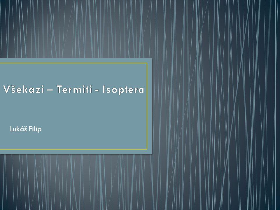 Všekazi – Termiti - Isoptera