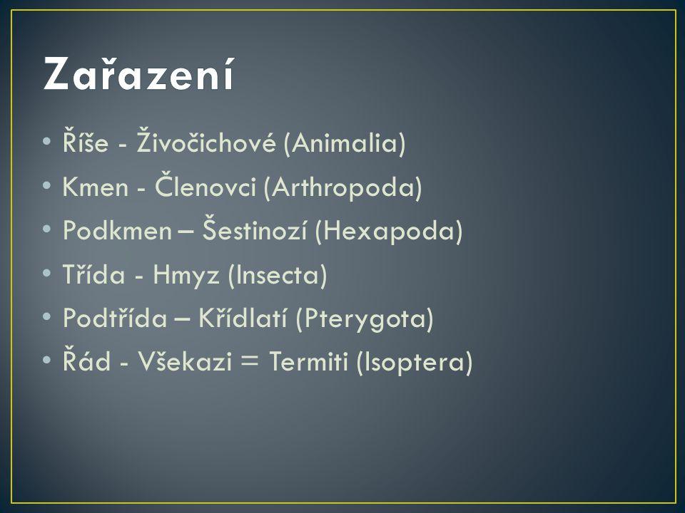 Zařazení Říše - Živočichové (Animalia) Kmen - Členovci (Arthropoda)