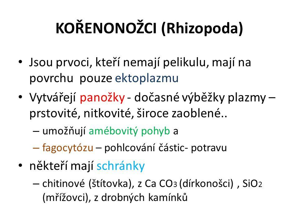 KOŘENONOŽCI (Rhizopoda)