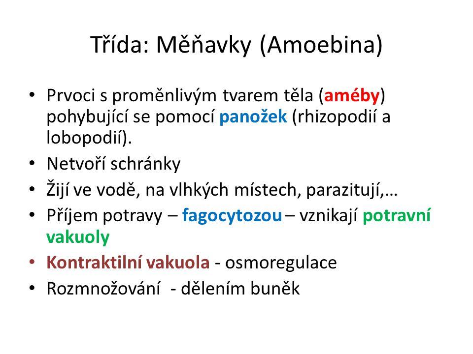 Třída: Měňavky (Amoebina)