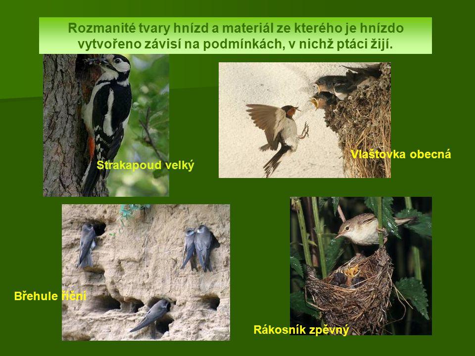 Rozmanité tvary hnízd a materiál ze kterého je hnízdo vytvořeno závisí na podmínkách, v nichž ptáci žijí.