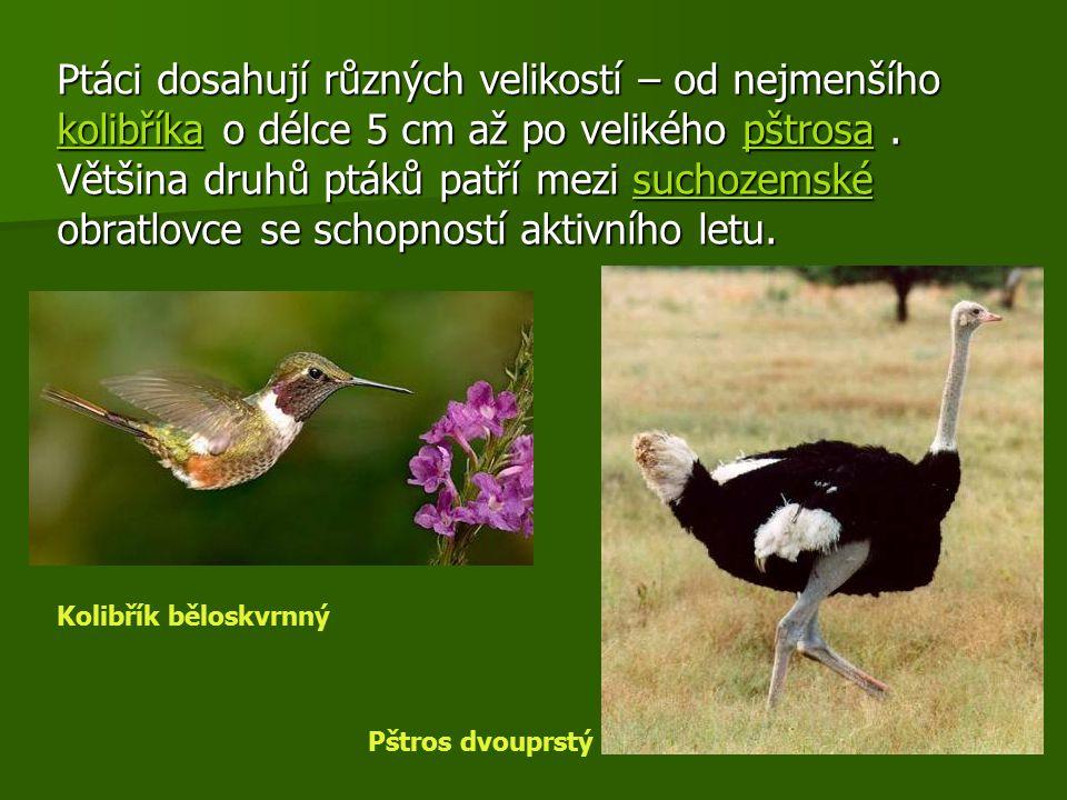 Ptáci dosahují různých velikostí – od nejmenšího kolibříka o délce 5 cm až po velikého pštrosa . Většina druhů ptáků patří mezi suchozemské obratlovce se schopností aktivního letu.