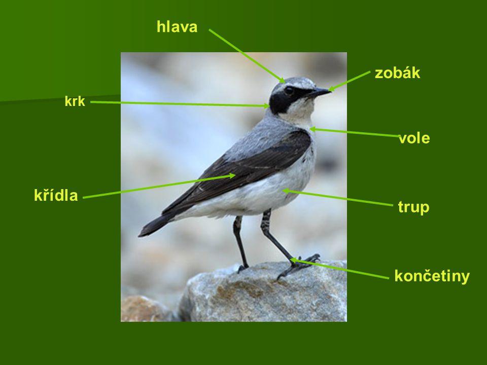 hlava zobák krk vole křídla trup končetiny