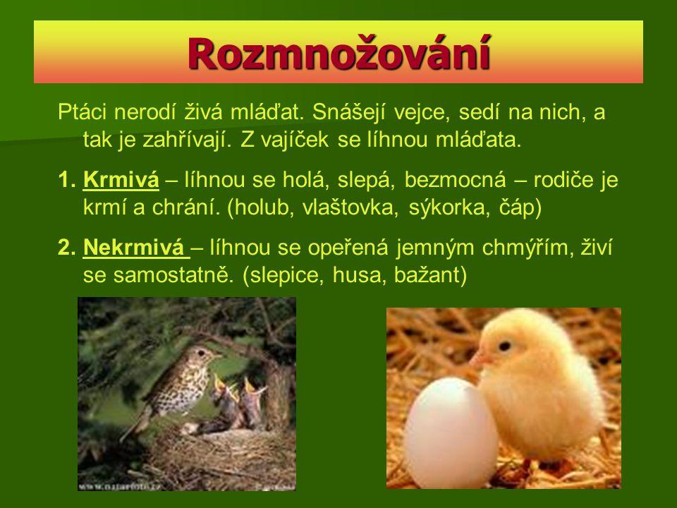 Rozmnožování Ptáci nerodí živá mláďat. Snášejí vejce, sedí na nich, a tak je zahřívají. Z vajíček se líhnou mláďata.