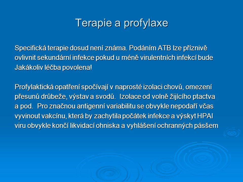 Terapie a profylaxe Specifická terapie dosud není známa. Podáním ATB lze příznivě.