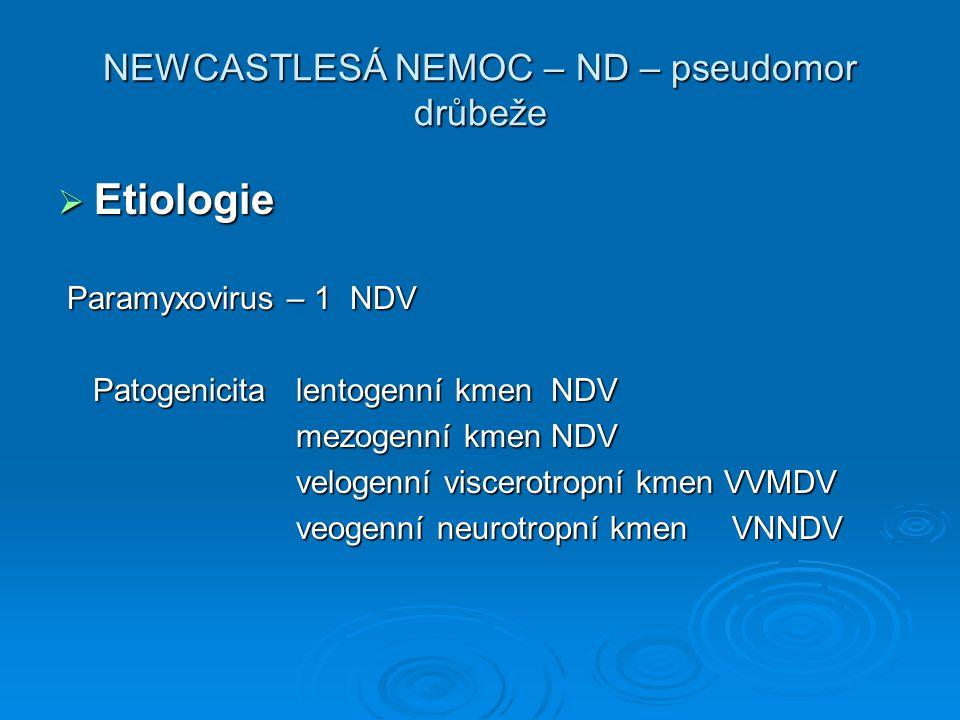 NEWCASTLESÁ NEMOC – ND – pseudomor drůbeže
