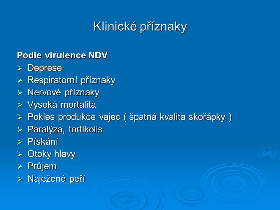 Klinické příznaky Podle virulence NDV Deprese Respiratorní příznaky