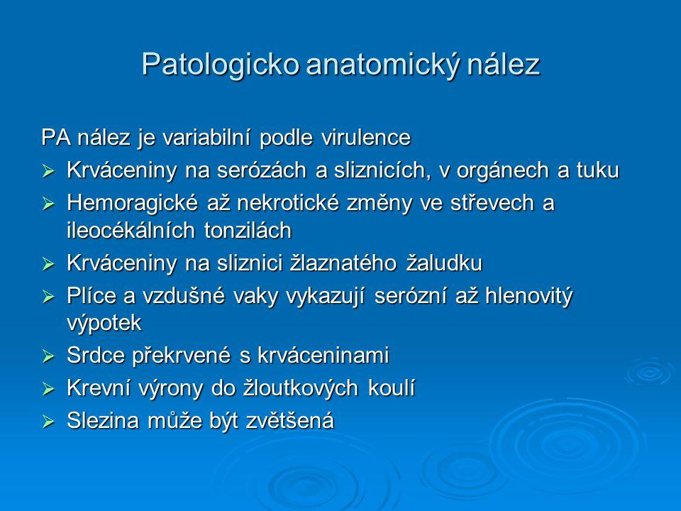 Patologicko anatomický nález